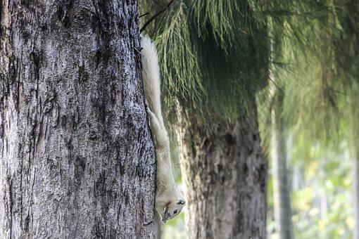 Tree, Squirrel, White, Rodent, Animal, Nature, Cute