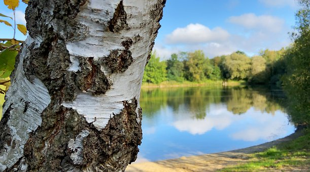 Nature, Lake, Tree, Summer Day, Out Of Focus, Green