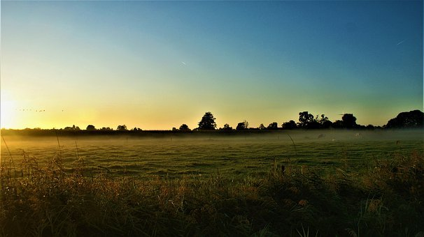 Sunrise, Pasture, Cows, Horizon, Dim, Twilight