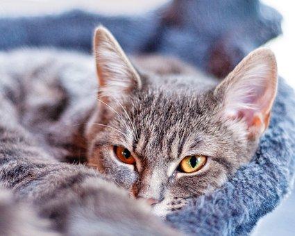 Cat, Pet, Sweet, Cute, Kitten
