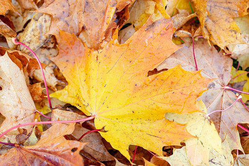 Autumn, Leaf, Maple, Fall, Texture, Abstract