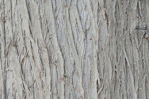 Tree, Bark, Grey, Texture, Background, Trunk, Wood