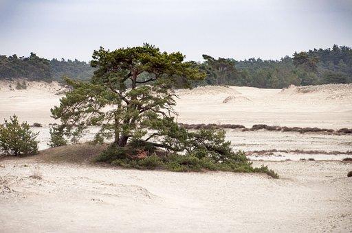 Tree, Veluwe, Dunes, Sand, Landscape, Heide