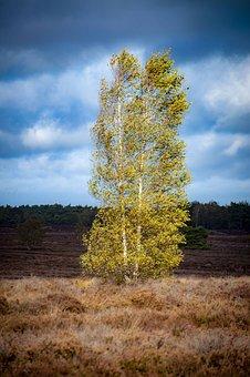 Birch, Grass, Air, Veluwe, Netherlands, Tree, Landscape