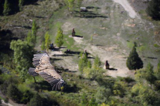 Vulture, Viewpoint, Mirador De La Galiana