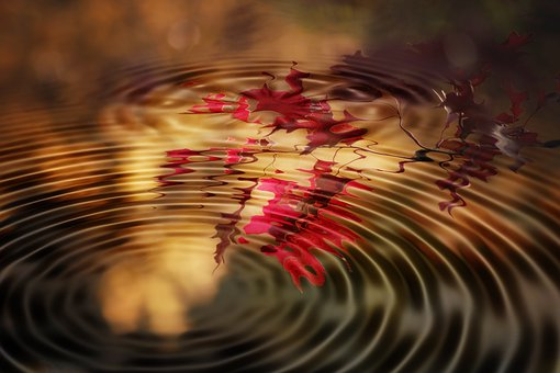 Wave, Concentric, Autumn, Branch, Leaves, Waves Circles