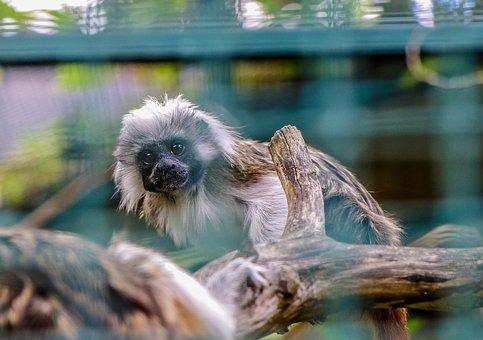 Monkey, äffchen, Animal World, Animal, Wild, Primate