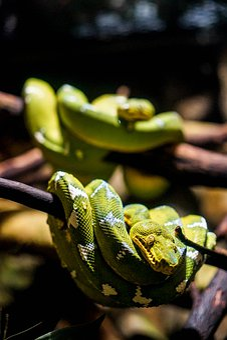 Aquarium, Snake, Canada, Vancouver, Green, Boa, Animal