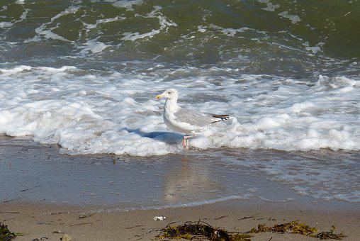Baltic Sea, Mecklenburg, Water, Coast, Gull, Sea