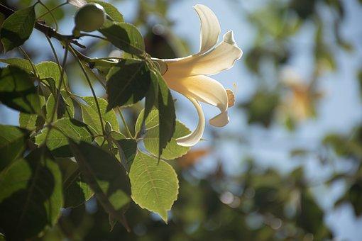 Flower, Tree, Botanic, Bloom, Blossom, Branch, Love