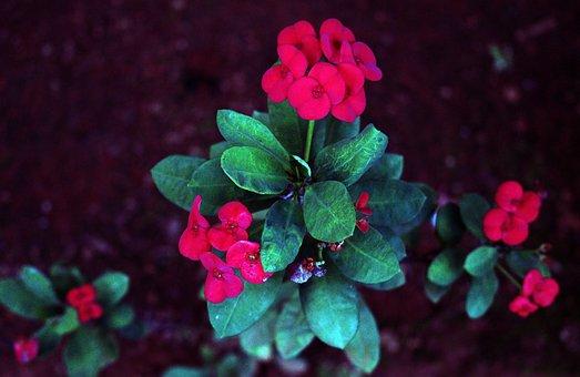 Garden, Flowers, Roses, Love, Bloom, Blossom, Poppy