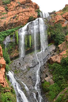 Witpoortjie, Waterfall, Witwatersrand, Botanical