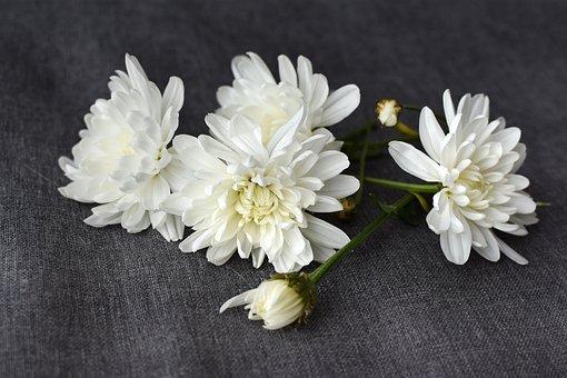 White, Flowers, Dahlias, Autumn, Grey, Cloth