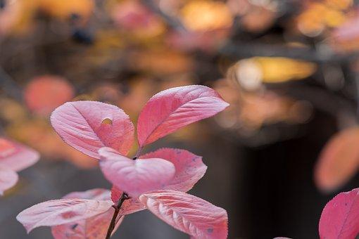 Foliage, Autumn, Nature, Colorful, October, Color