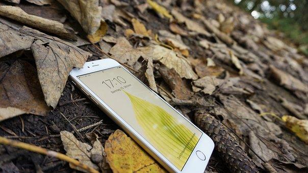 Iphone, Apple, Fall, Leaves, Phone, Floor, Brown Phone
