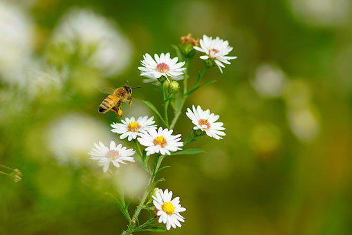 Bee, Flower, Summer, Insects, Nature, Garden, Flowers