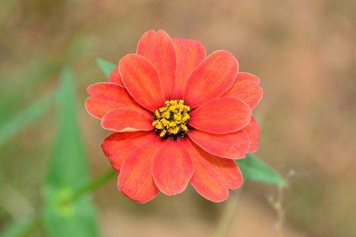 Wild, Flower, Red, Spring, Bush Veld, Savannah, Nature
