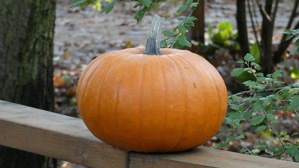 Pumpkin, Halloween, Autumn, Food, Vegetables, Harvest