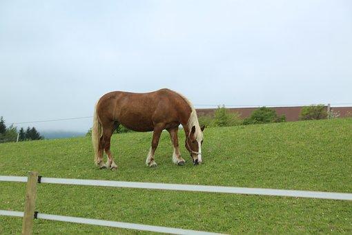 Horse, Animal, Nature, Ride, Pasture, Horse Head