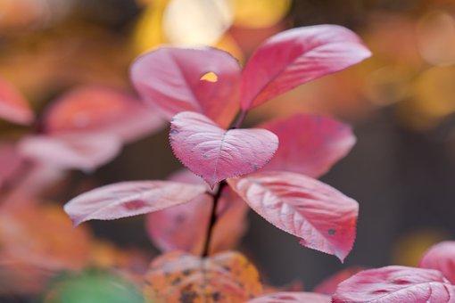 Autumn, Leaves, Nature, Tree, Mood, Season, Red, Bright