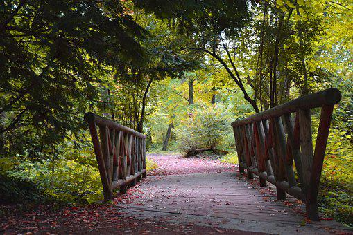 Bridge, Nature, Fall, Wood, Mood