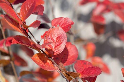 Autumn, Foliage, Forest, Nature, Colorful, Trees