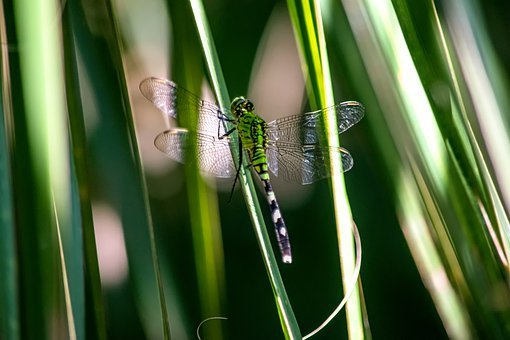 Dragonfly, Insects, Nature, Wing, Texture, Summer, Leaf