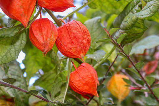 Papillion, Flower, Green, Nature, Orange, Landscape