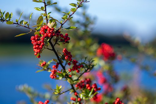 Scotland, Autumn, Berries, Nature, Sky, Landscape