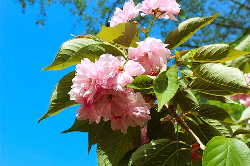 Pink Flower, Flower, Nature, Valentine's Day