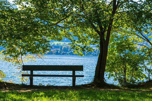 Bank, Wood, Nature, Landscape, Bench, Lake, Water