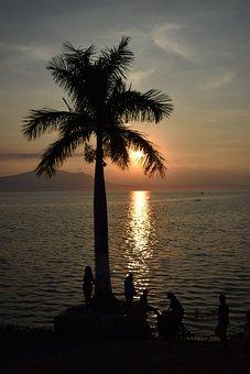 Palm Tree, Lake, Chapala, Jalisco, Mexico, Christmas