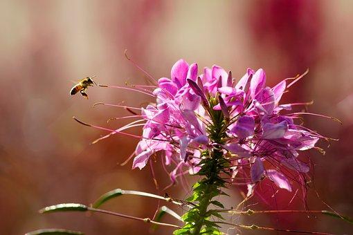 Flowers, Nature, Plants, Spring, Petal, Bee, Sky