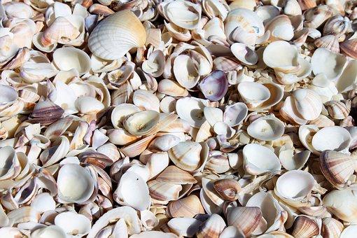 Venezuela, Mussels, Beach, Atlantic Ocean, Sea