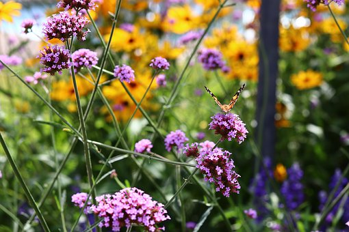 Summer, Meadow, Insect, Spring, Garden, Beautiful