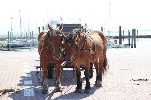 Horses, Coach, Transport, Team, Wagon, Coachman