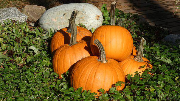 Pumpkin, Autumn, Halloween, Vegetables, Harvest, Food