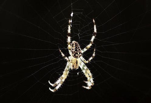 Spider, Fear, Creepy, Insect, Weird, Phobia, Halloween