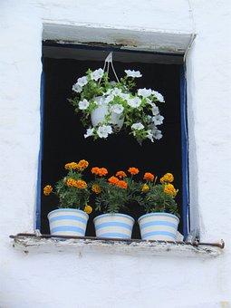Flowers, Window, Flowerpot, House