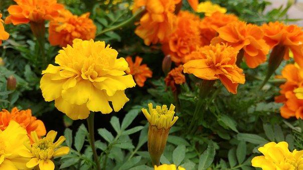 Yellow Flowers, Yellow Flower, Orange Wild Flower