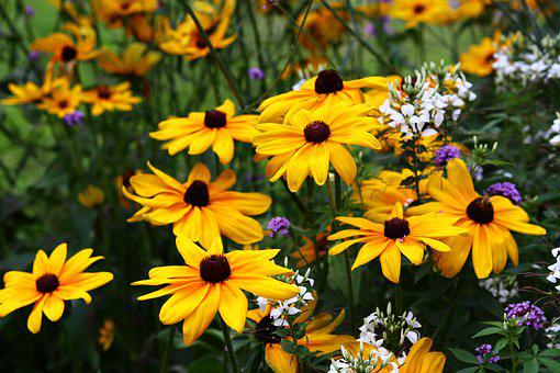 Sunflower, Yellow, Meadow, Beautiful, Animals, Insect