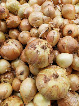 Onion, Vegetable, Sunday, Organic, Food, Agriculture