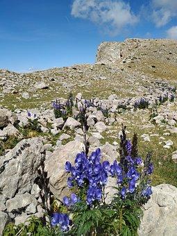 Aragonese Pyrenees, Mountain, Flowers, Landscape