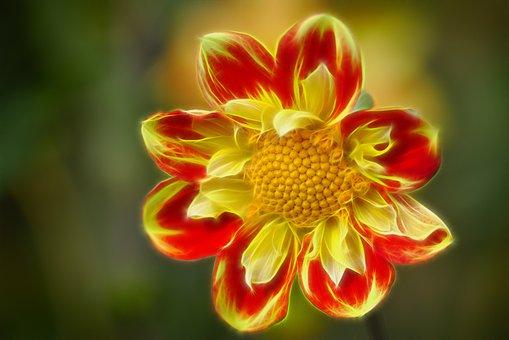Dahlia, Autumn, Blossom, Bloom, Alienation