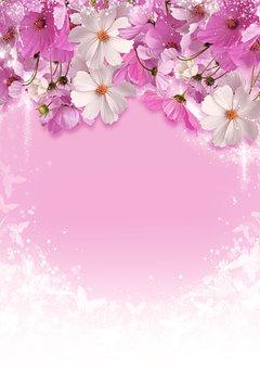 Bouquet, White, Cosmea, Flowers, Pink, Delicate, Autumn