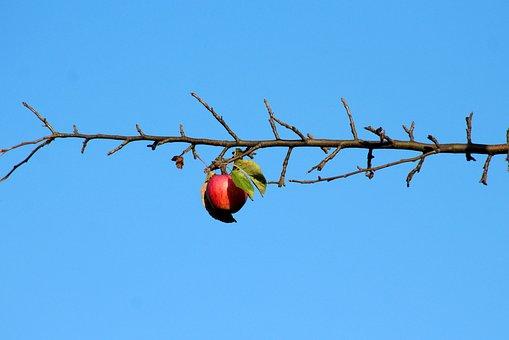 Apple, Fruit, Sprig, Autumn, Nature, Season, Collapse