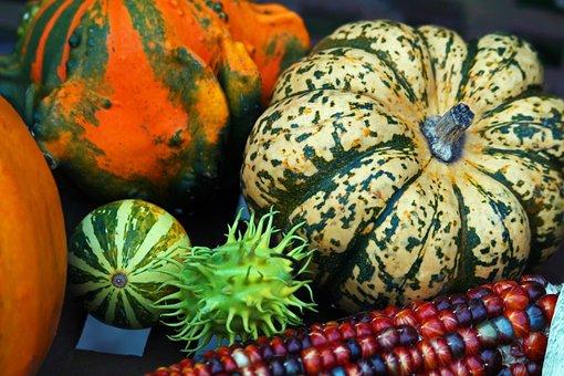 Pumpkin, Thanksgiving, Autumn, Harvest, Halloween