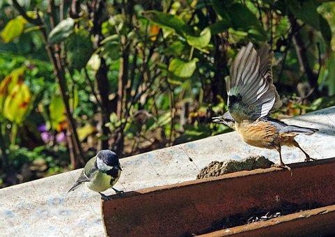 Nature, Animal, Birds, Nuthatch