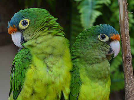 Parrots, Birds, Plumage, Colorful, Parrot, Nature