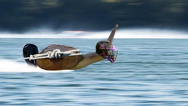 Powerboat, Snail, Racing Boat, Boat Race, Water